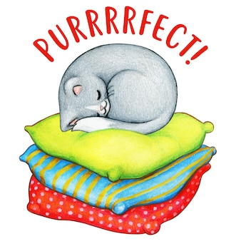 Akwarela szary kotek śpi na kolorowe poduszki