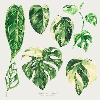 Akwarela tropikalne zielone liście. monstera pstrokata ilustracja zieleni