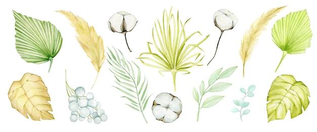 Akwarela tropikalny zestaw z suchymi liśćmi palmowymi i ilustracją trawy pampasowej