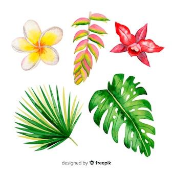 Akwarela tropikalnych kwiatów i liści