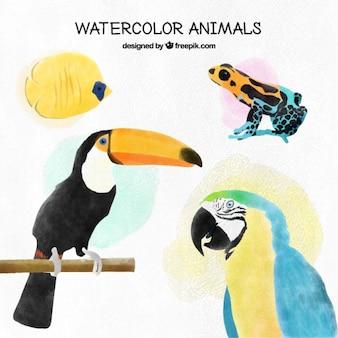 Akwarela tropikalnych ptaków i innych zwierząt egzotycznych ustawić