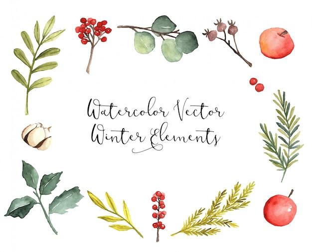 Akwarela wektor zimowe elementy botaniczne