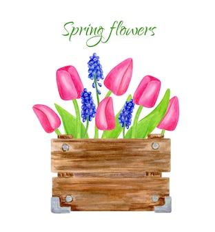 Akwarela wiosenny bukiet w drewnianym pudełku różowe tulipany z liśćmi i ilustracją kwiatów muscari