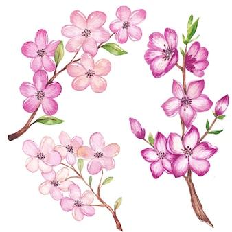 Akwarela wiśni gałęzi i kwiatów