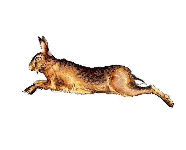 Akwarela zając, królik na białym tle