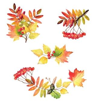 Akwarela zestaw jesiennych liści: klon, jarzębina, żołędzie, brzoza.