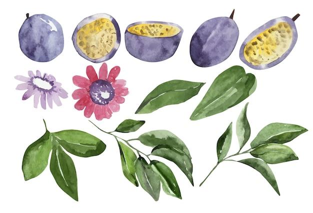 Akwarela zestaw marakui i liści