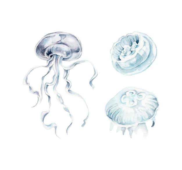 Akwarela zestaw meduzy