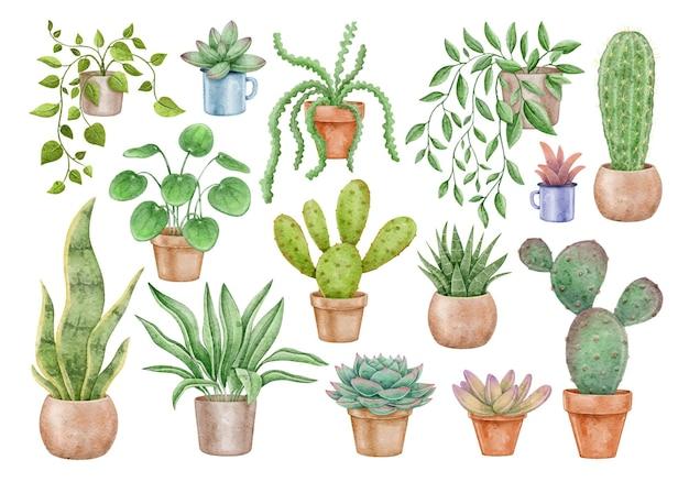 Akwarela zestaw roślin domowych i kaktusów doniczkowych