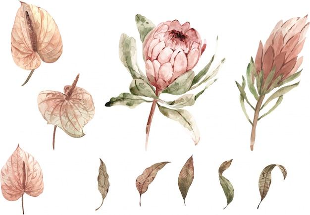 Akwarela zestaw roślin tropikalnych. pastelowe kolory. hnad malował ilustrację. obrazek. element izolowany nowoczesne rośliny egzotyczne.