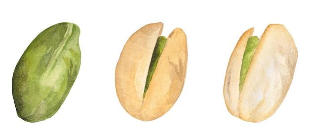 Akwarela zestaw zielonych orzechów pistacjowych w łupinach