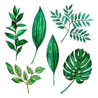 Akwarele ilustracje z zielonymi liśćmi, ziołami. dekoracja zestawu zieleni monstera.