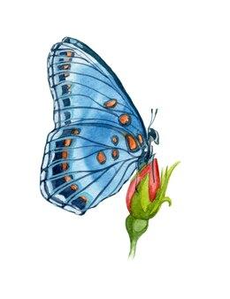 Akwarele ręcznie malowane ilustracja motyl