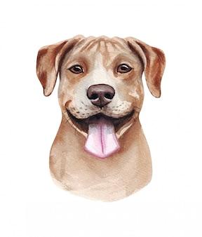 Akwareli ilustracja śmieszny pies. popularna rasa psa. pies. amerykański pit bull terrier. ręcznie robiony charakter odizolowywający na bielu