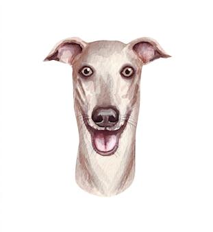 Akwareli ilustracja śmieszny pies. popularna rasa psa. pies charcik. ręcznie robiony charakter odizolowywający na bielu