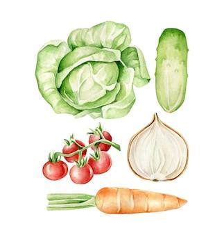 Akwarelowe warzywa kapusta, ogórek, cebula, pomidory, marchewka