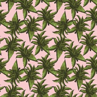 Aloe ręcznie rysowane szkic kolorowy wzór tła