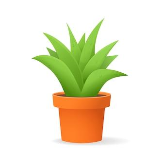 Aloe vera w doniczce. soczyste liście roślin na białym tle