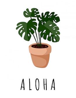 Aloha banner. pocztówka z soczystej rośliny monstera. przytulny plakat w stylu skandynawskim w stylu lagom