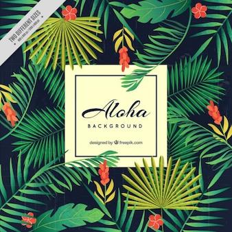 Aloha tło, kwiatowy motyw