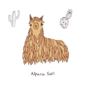 Alpaca suri ręcznie rysowane doodle ilustracji wektorowych