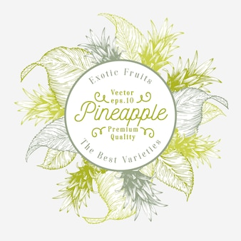 Ananasowy owocowy projekta szablon. ręcznie rysowane wektor ilustracja owoców. grawerowane styl retro tropikalny tło.