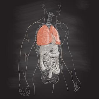 Anatomia ciała ludzkiego
