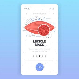 Anatomia ludzkich mięśni opieki zdrowotnej koncepcja masy mięśniowej smartfon ekran aplikacja mobilna kopia przestrzeń