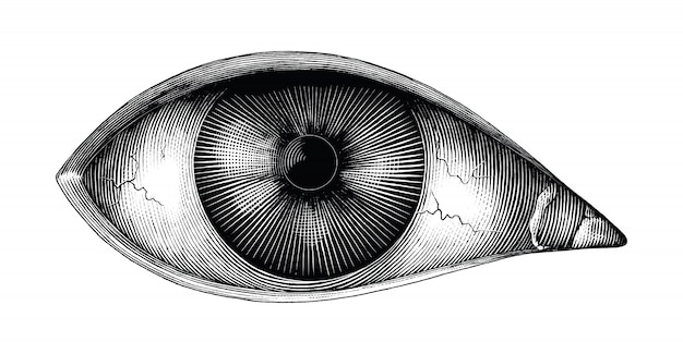 Anatomia ludzkiego oka ręka rysować vintage clipart na białym tle