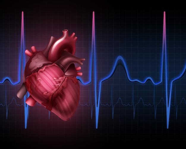 Anatomia ludzkiego serca z kardiogramem. na białym tle