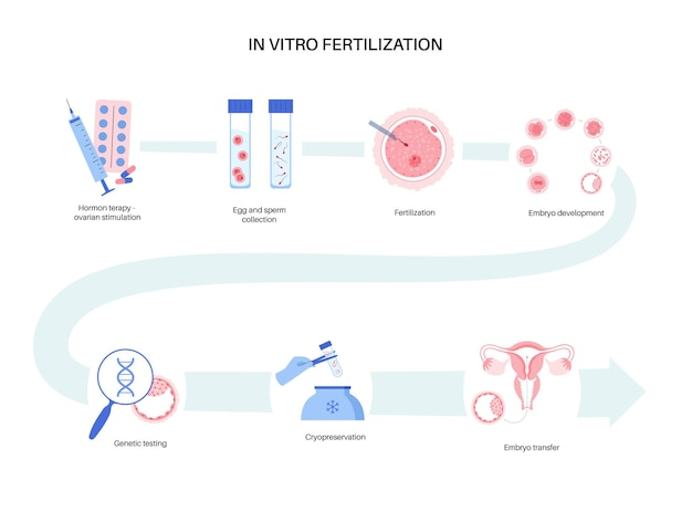 Anatomia ludzkiej komórki jajowej. badania nad zapłodnieniem, ginekologią i in vitro.