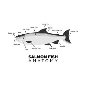 Anatomia wektora ryb łososia dla edukacji