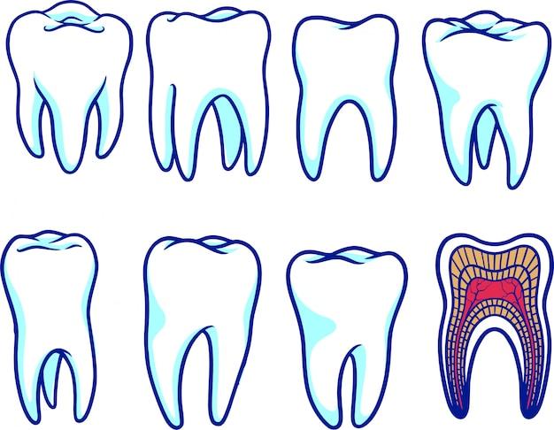 Anatomia zęba