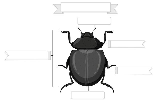 Anatomia zewnętrzna arkusza roboczego chrząszcza