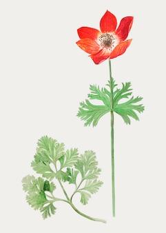 Anemone w stylu vintage