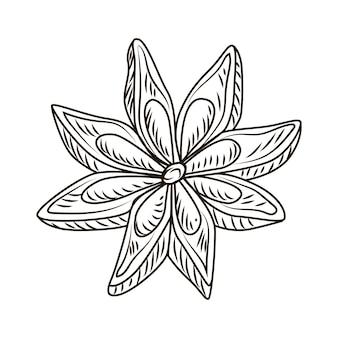 Anyż w stylu grawerowanym na białym tle. vintage szkic konspektu przyprawy z bliska. projekt ilustracji wektorowych.