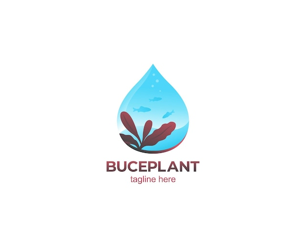 Aquascape z projektem logo roślin bucephalandra