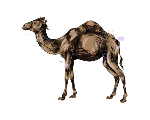 Arabski wielbłąd z odrobiną akwareli.