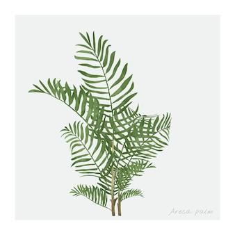 Areca palmowy liść odizolowywający na białym tle