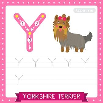 Arkusz ćwiczeniowy śledzenia wielkich liter litery y. pies yorkshire terrier