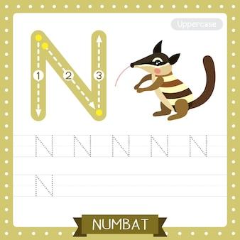 Arkusz ćwiczeniowy śledzenia wielkich liter na literę n. numbat