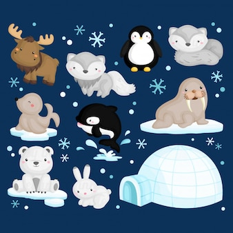 Artic Animal Set