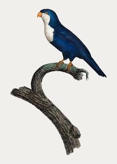 Arymanon parakeet