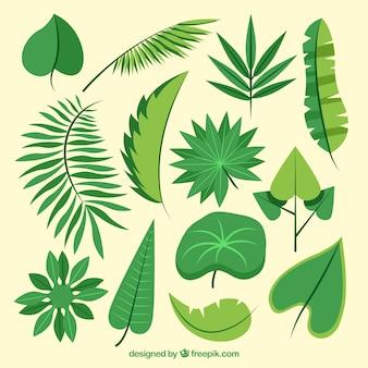 Asortyment liści palmowych wyciągnąć rękę