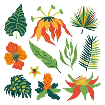 Asortyment tropikalnych kwiatów i liści