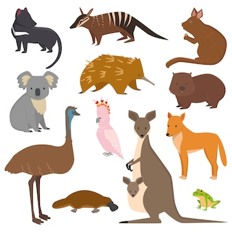 Australijskie dzikie zwierzęta wektorowe kolekcja kreskówek australia popularne zwierzęta jak dziobak,