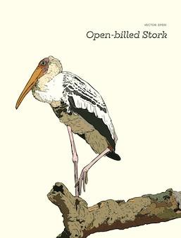 Azjatyccy openbill ptaki na gałąź.