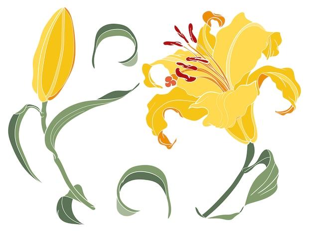 Azjatyckiej lelui żółty kwiat i pączek