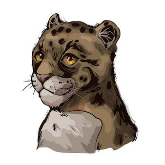 Baby leopard mglisty, portret egzotycznych zwierząt na białym tle szkicu. ręcznie rysowane ilustracji.