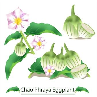 Bakłażan chao phraya na białym tle